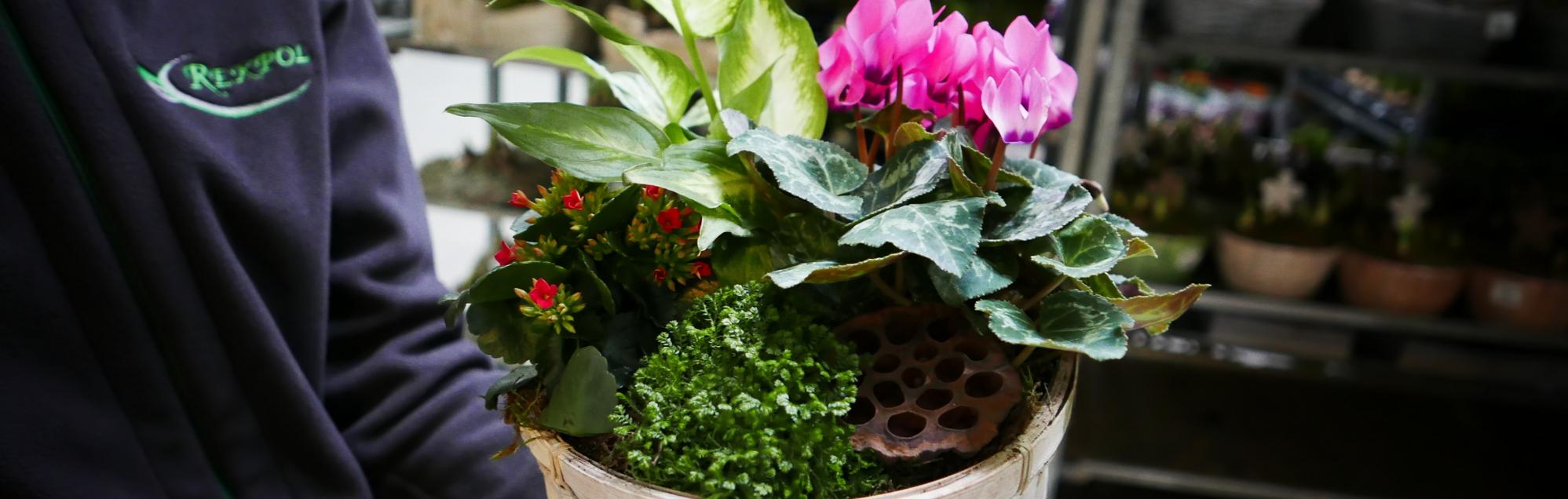 Kompozycje roślinne